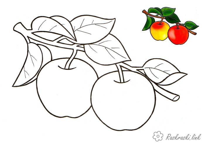 Coloring Apples  Ripe, liquid, red, apples, coloring pages