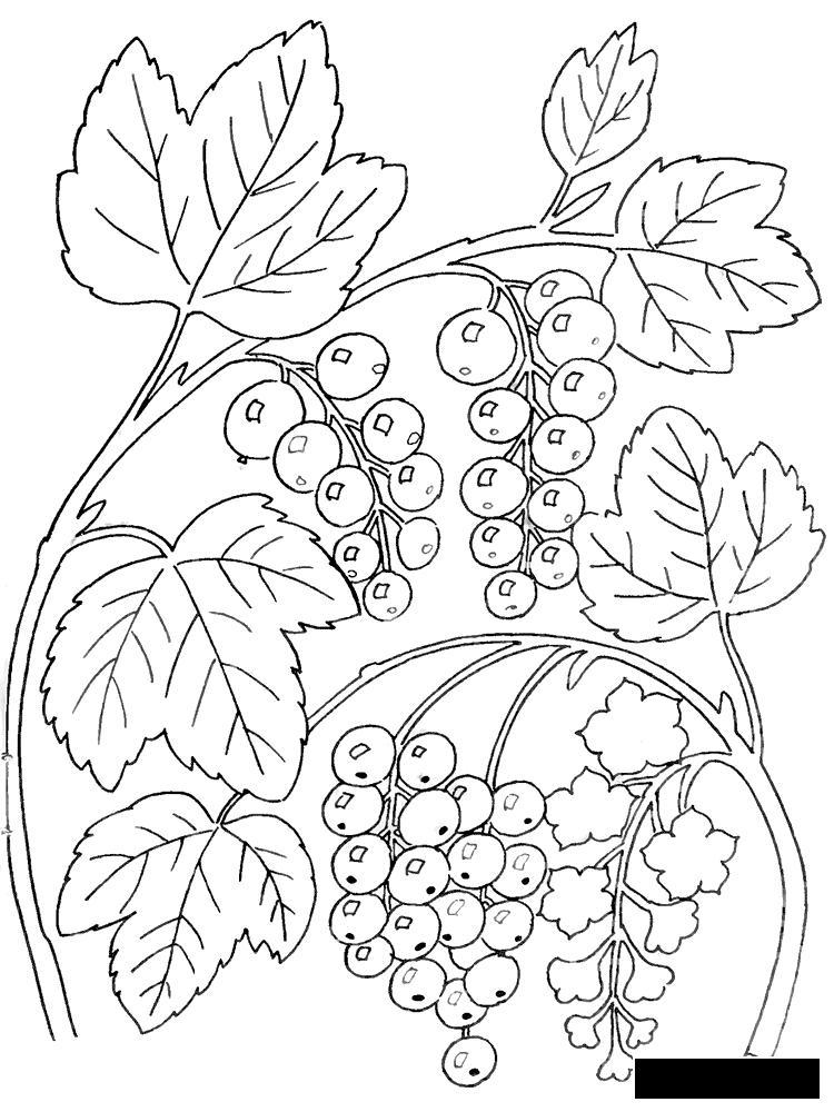 Розмальовки ліс ягоди, ліс, лісові, смачні, розфарбування, для дітей
