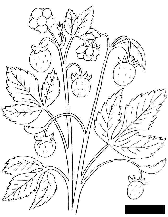 Coloring Berries Forest, wild berries, fruits, coloring pages books for children