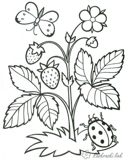 Розмальовки Ягоди Божа корівка, метелик, розфарбування, ягоди, полуниця