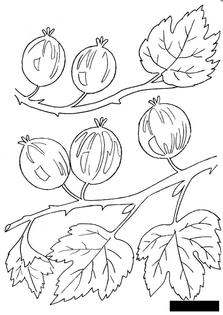 Coloring Berries крыжовник, сад, вкусная, ягода, раскраска детская