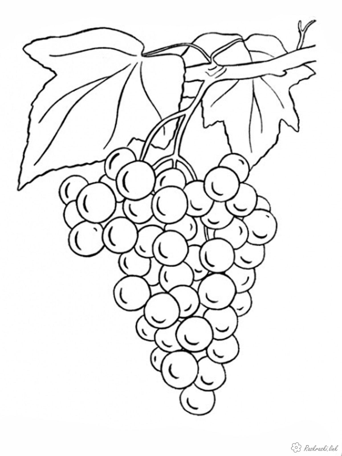 Розмальовки зібрані розмальовки дитячі, виноград, зібрані, стиглий