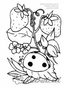 Розмальовки Ягоди Малина, ягоди, розфарбування, маленька, сонечко
