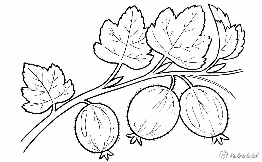 Розмальовки Ягоди Аґрус, розфарбування, ягода, корисна, вксная
