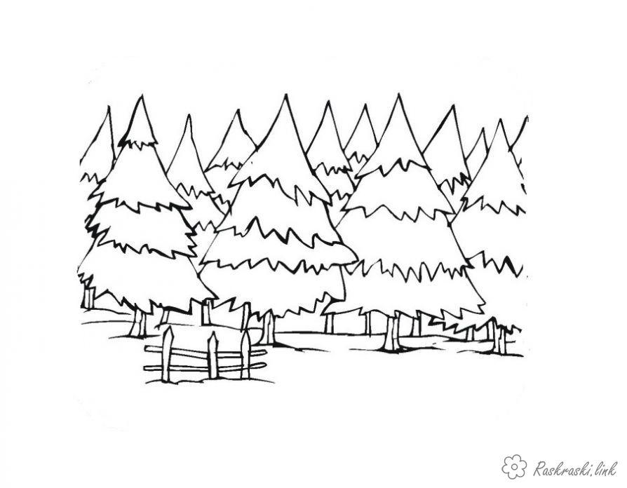 Розмальовки багато розфарбування ліс, багато ялинок, красиві дерева