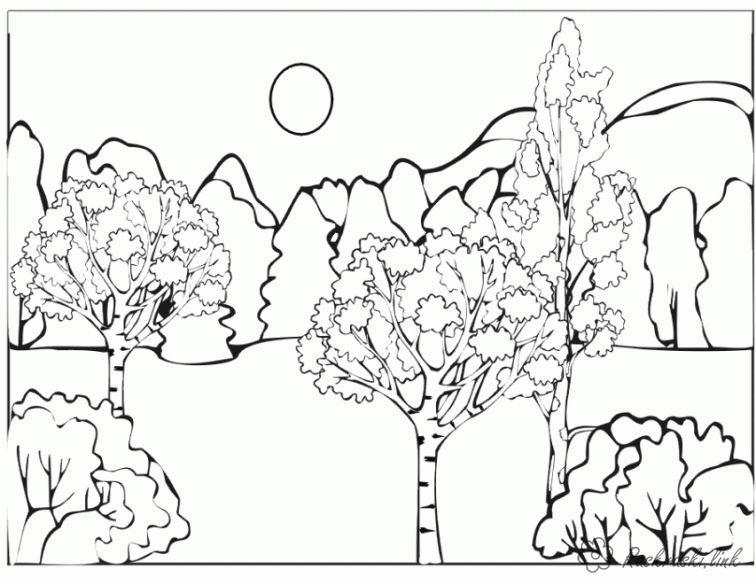 Розмальовки гори розфарбування ліс, деревця, галявина, гори, берези
