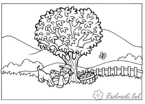 Раскраски дерево раскраска лето большое дерево мальчик собачка