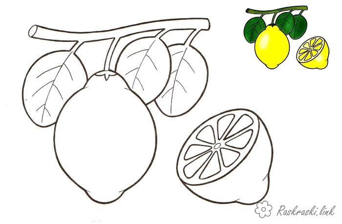 Розмальовки Фрукти Лимон, росте на дереві, розфарбування