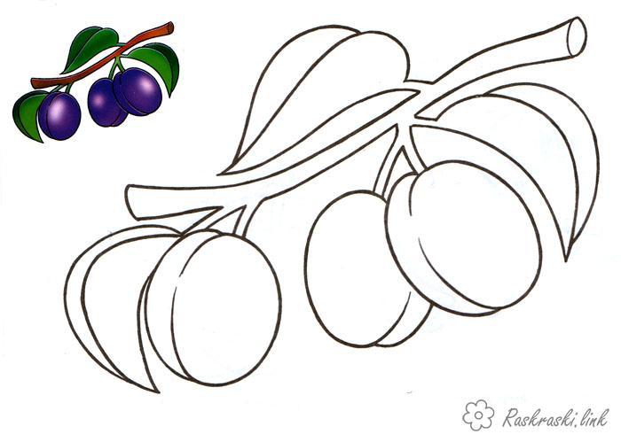 Розмальовки стигла Стигла, дика, слива, розфарбування, для дітей, фрукти