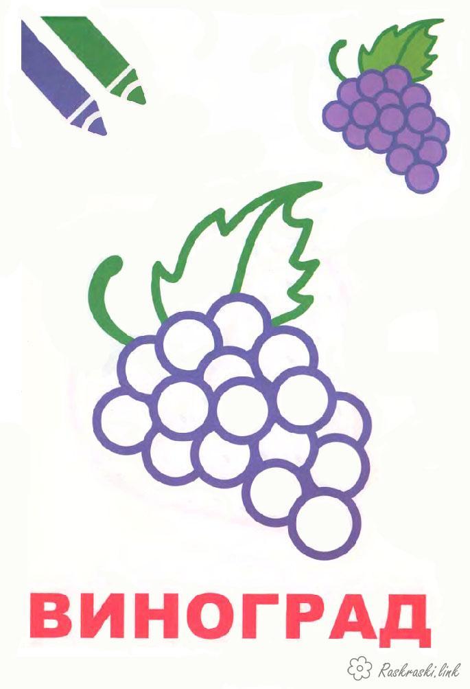 Розмальовки виноград Виноград, фрукти, розфарбування, стиглий, соковитий