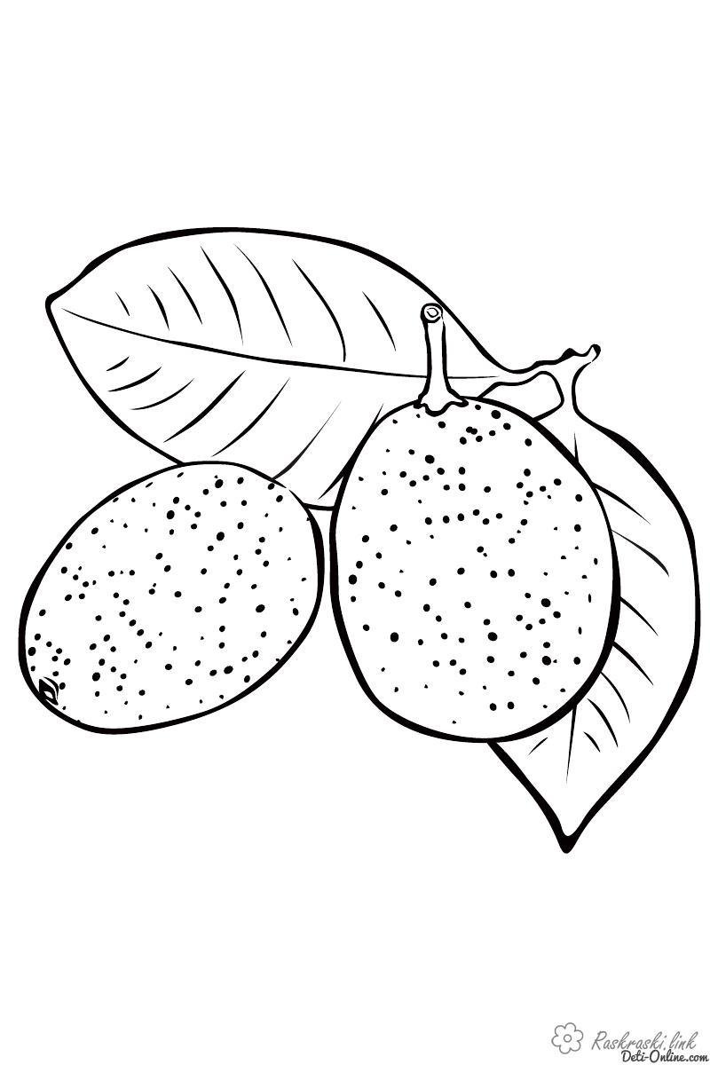 Розмальовки стиглі стиглі, соковиті, фрукти, корисні для здоров'я
