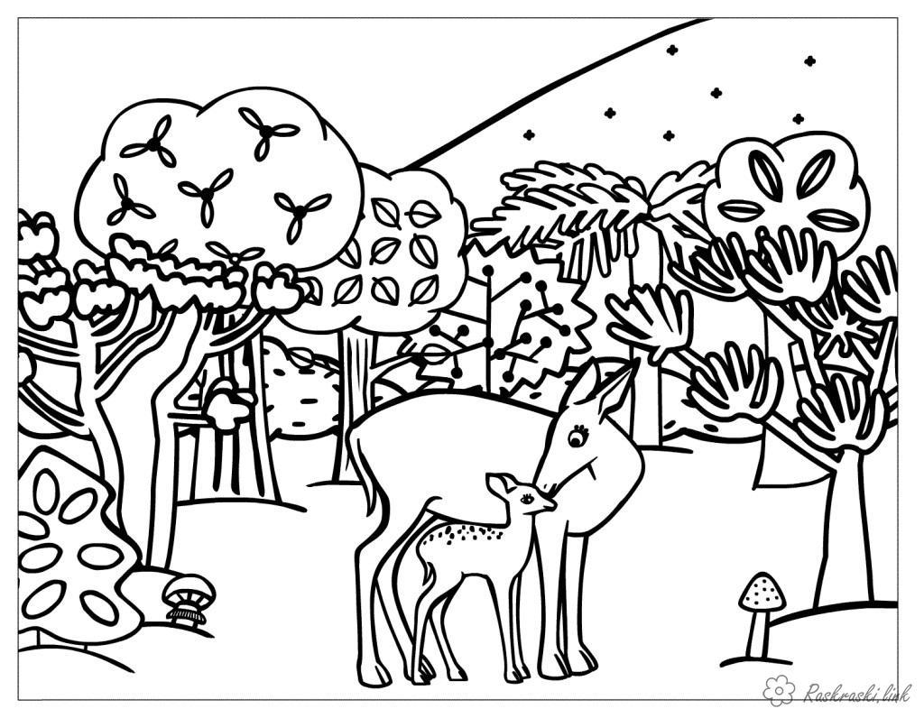 Раскраски природа Раскраска животные, дикие животные, раскраска олень, олениха,раскраска олененок, лес, деревья, грибы, два оленя
