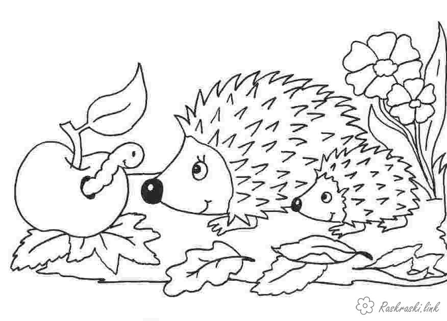 Coloring looks coloring pages animals, nature, wild animals, wild animals, coloring pages hedgehog, hedgehog, small hedgehog, apple, worm, flowers, two hedgehogs