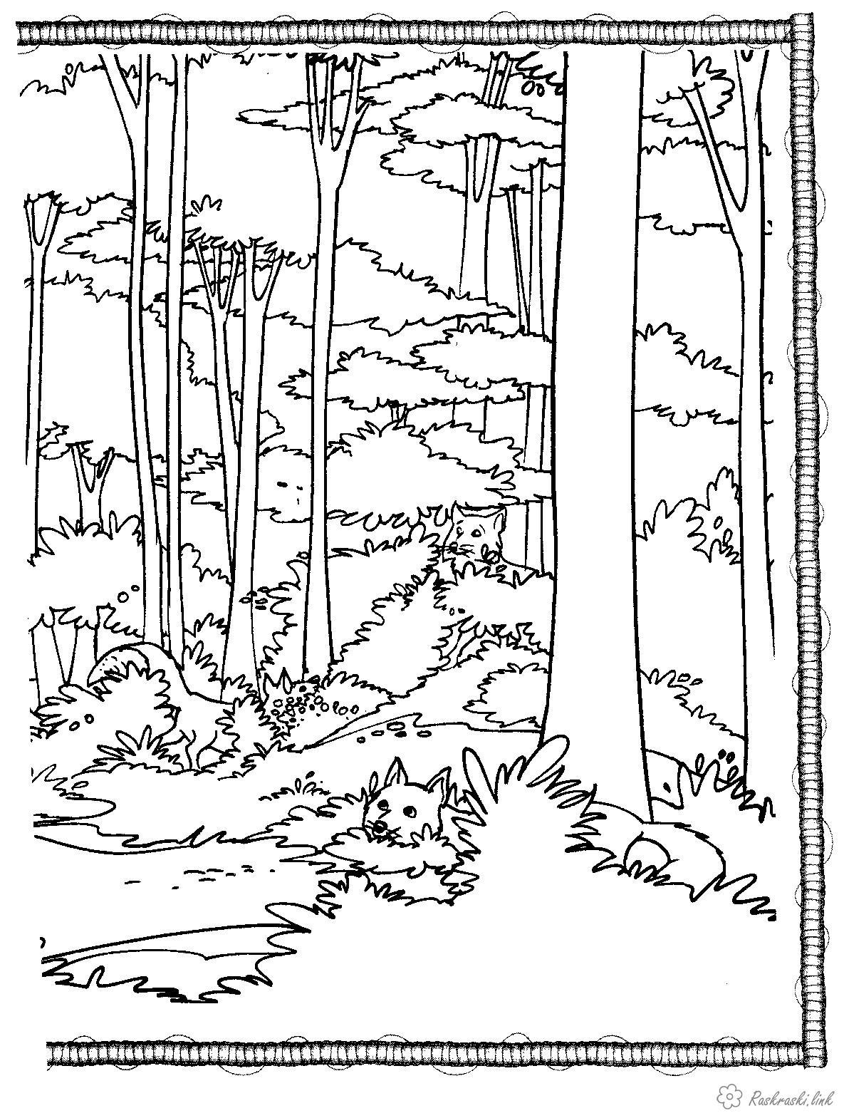 Розмальовки ліс Розмальовка тварини, природа, лісові тварини, ліс, лисиця, лисички, дерева, лисички ховаються, склад...