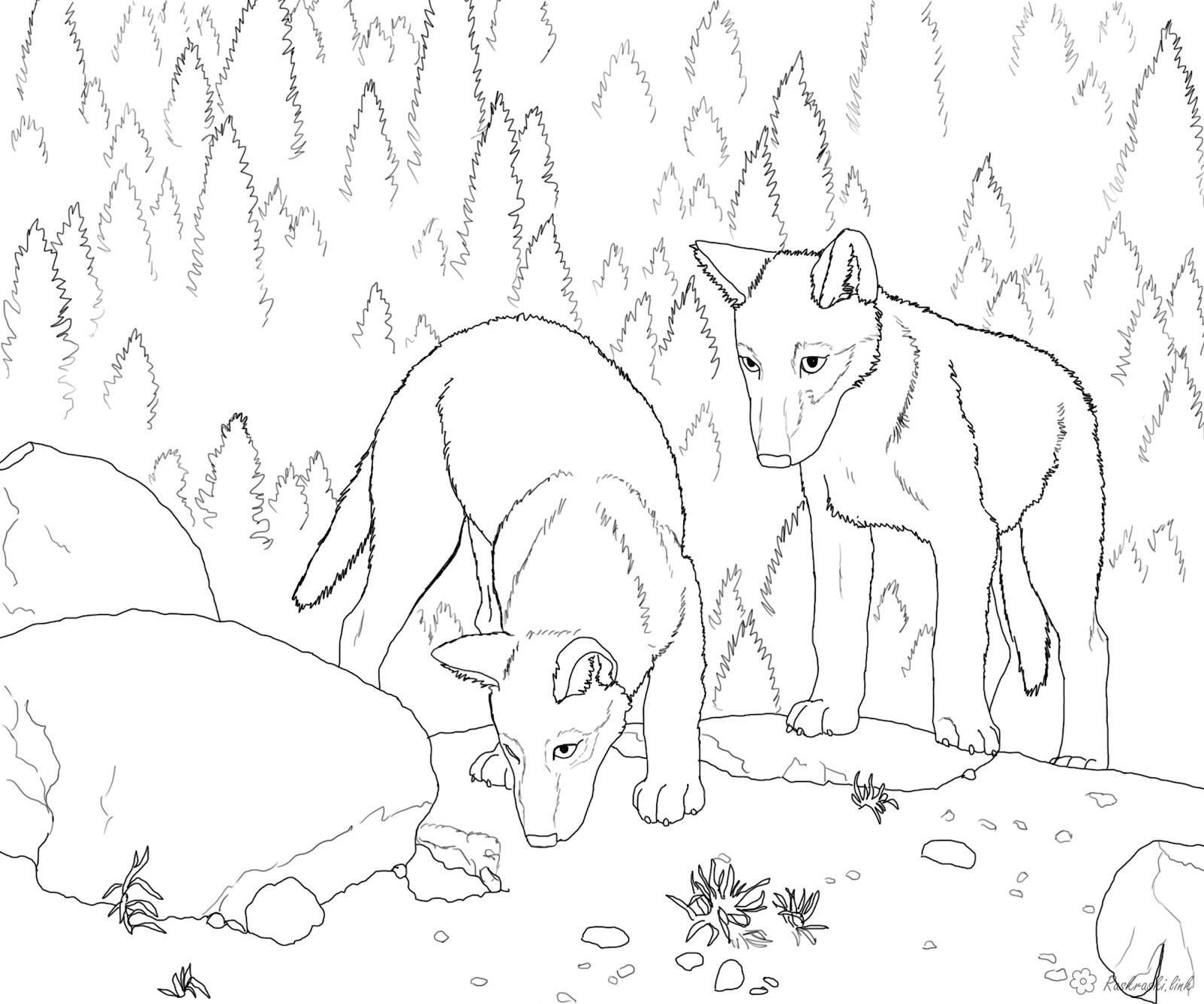 Coloring cub coloring pages animals, wild animals, forest animals, coloring pages wolf, two cub, forest, trees, complex coloring pages, print