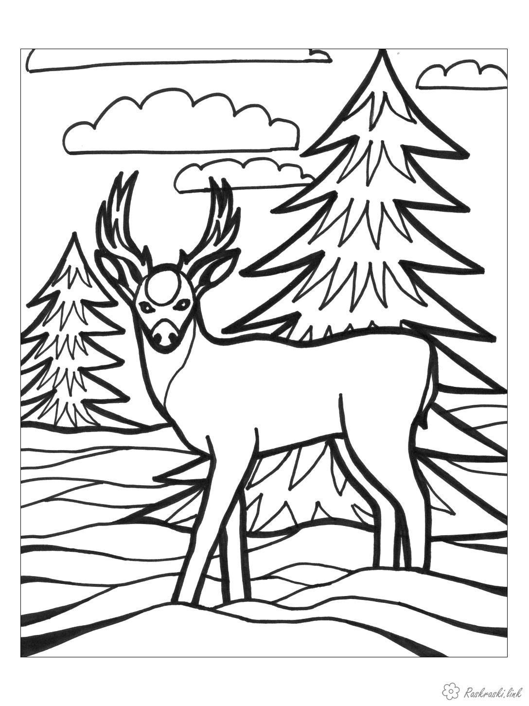 Раскраски зима Раскраска  животные, природа, дикие животные, лесные животные, раскраска олень, рога, ели, лес, снег, зима, облака