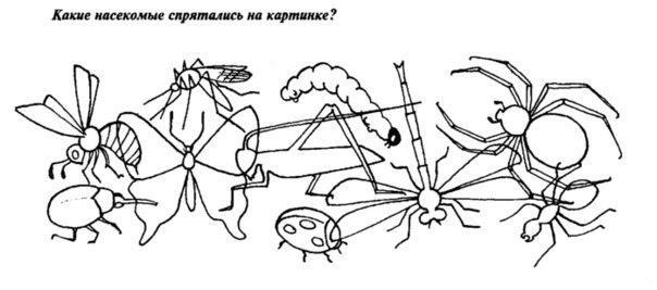 Раскраски изучаем насекомые изучаем насекомых