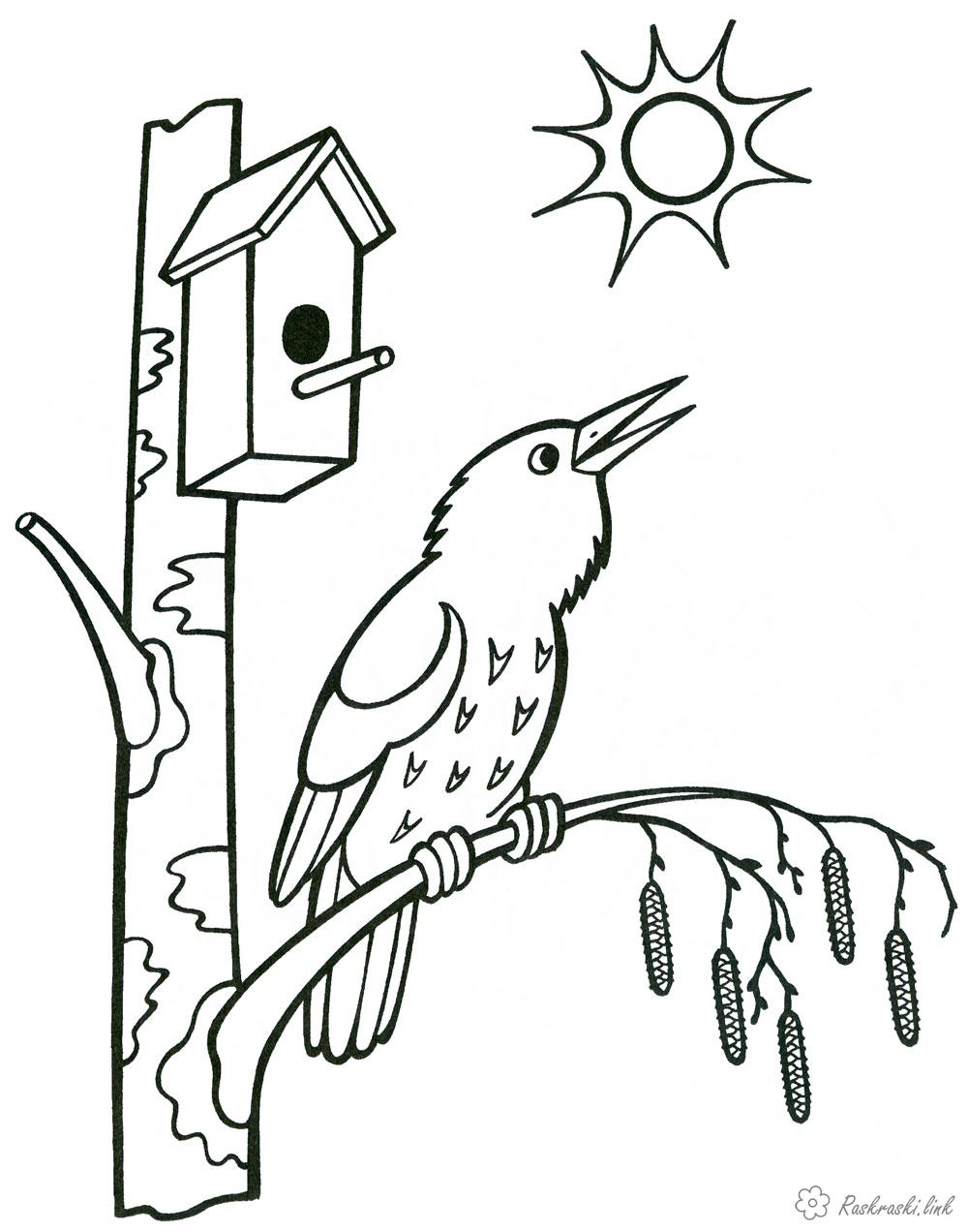 Coloring Spring starlings flew, birdhouse, spring sun, spring coloring pages