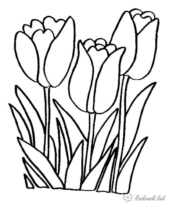 Розмальовки тюльпани Квіти, тюльпани, весна