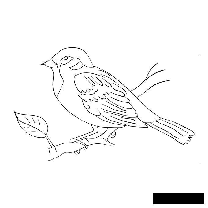 Раскраски природа Птичка, весна