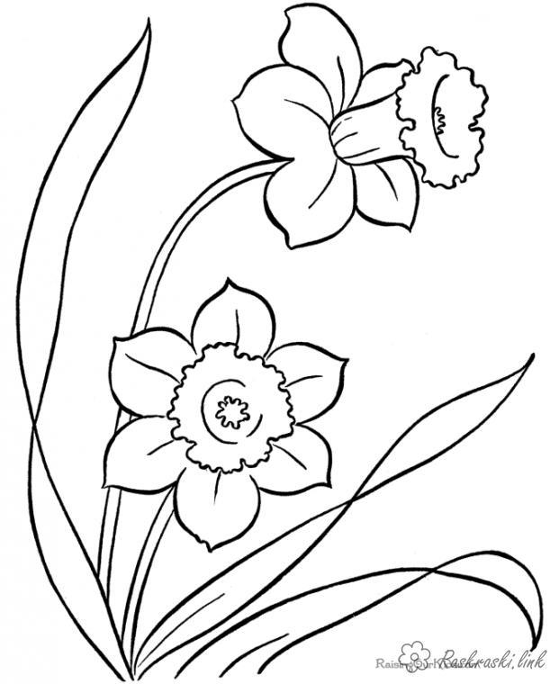 Раскраски природа цветок