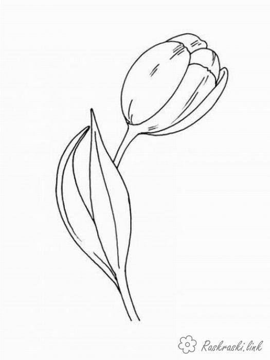 Раскраски природа раскраска цветок