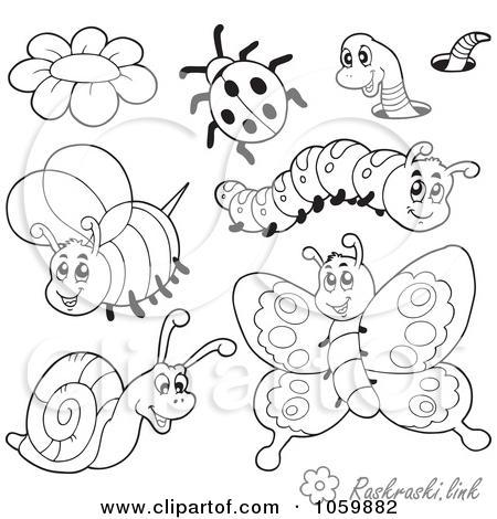 Coloring insects детские раскраски, насекомые, бабочка, гусеница, пчелка, божья коровка, улитка, цветочек