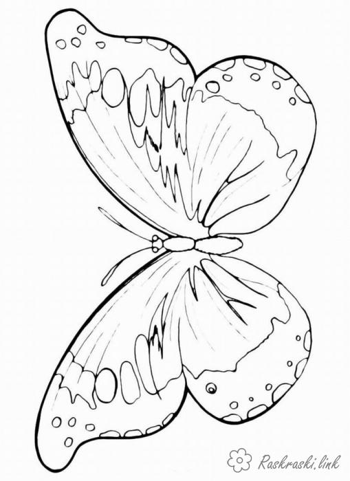 Coloring Insects coloring pages books for children,