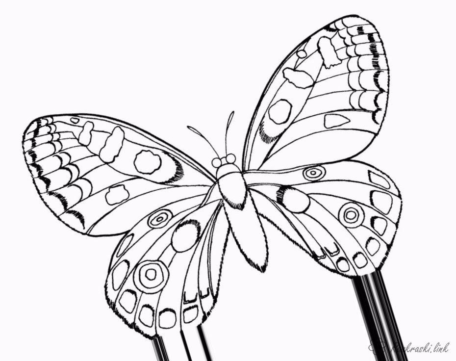 Розмальовки раскраска Детская раскраска насекомые бабочки, мотыльки