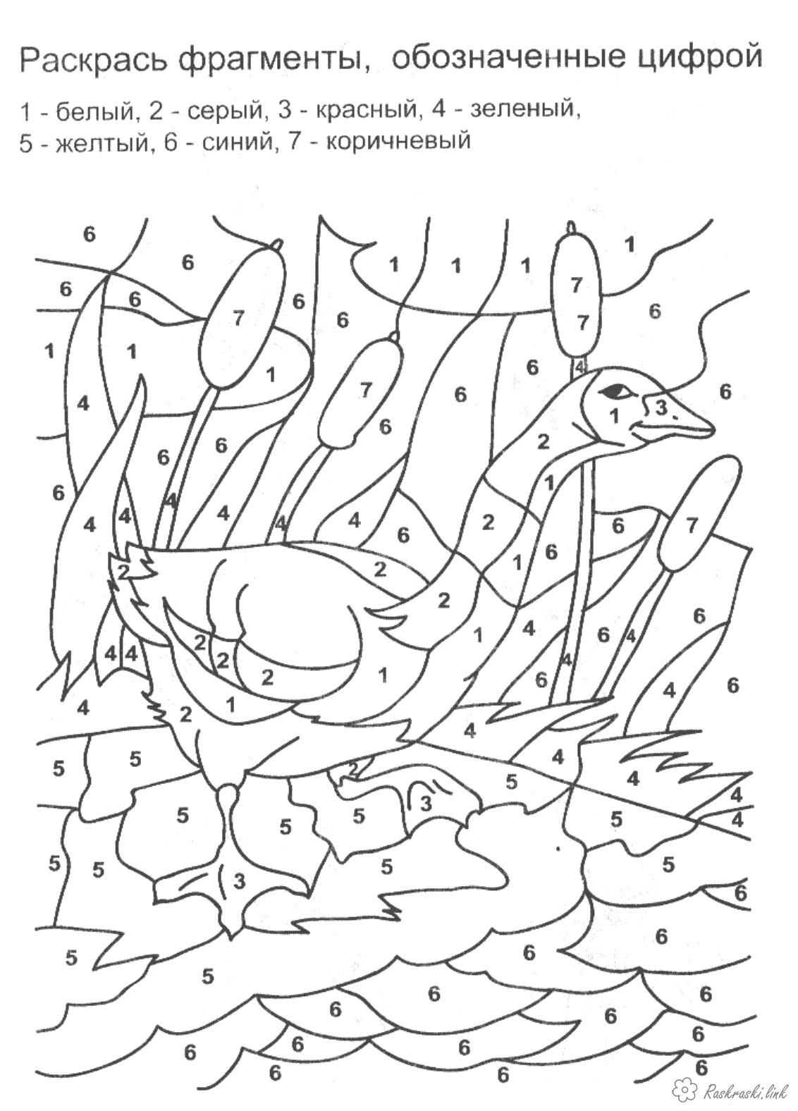 Coloring coloring pages Math Grade 1 Paint by numbers, goose, reeds, grass