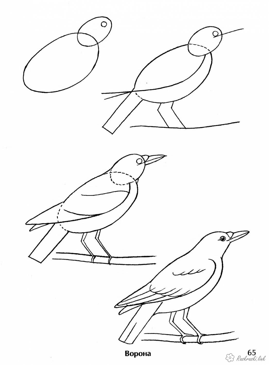 Coloring How to draw Crow stages