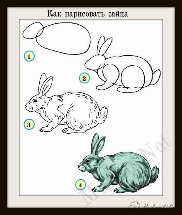 Coloring How to draw hare hare draw step by step how to draw
