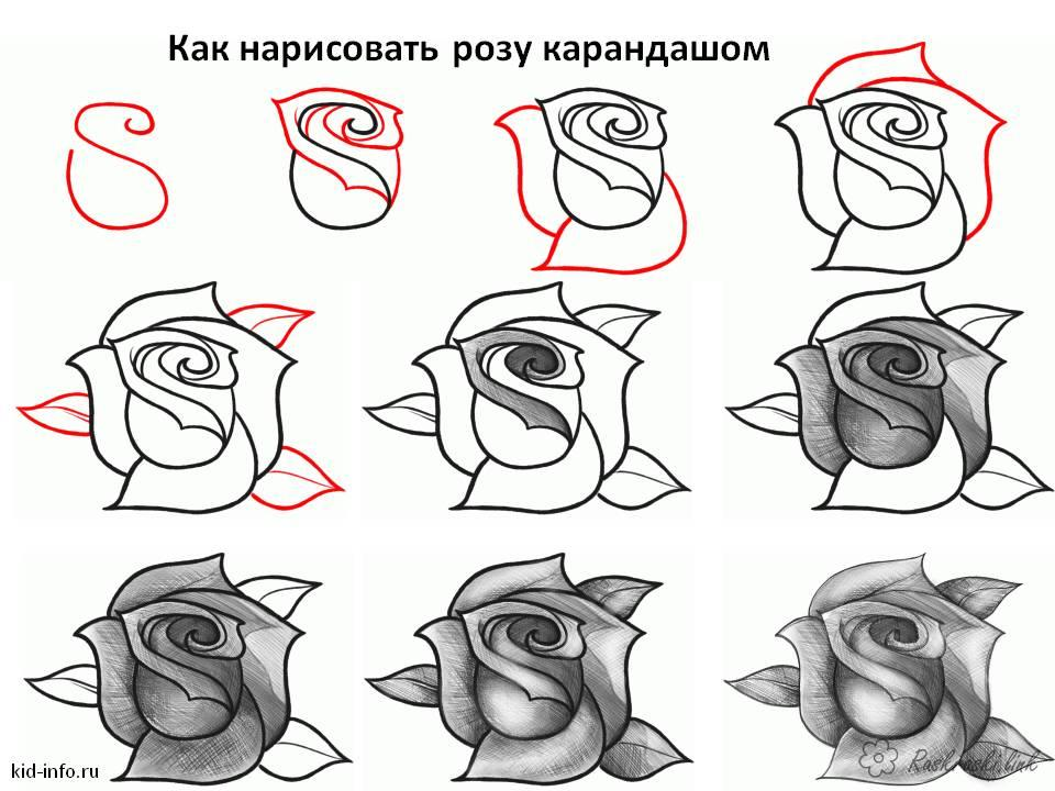 Coloring How to draw how to draw a rose
