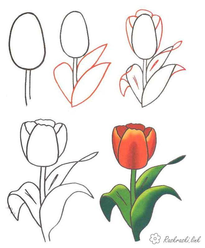 Coloring How to draw how to draw a tulip