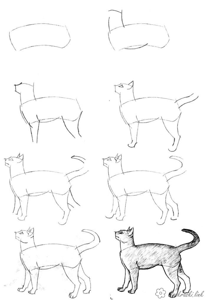 Coloring How to draw how to draw a cat