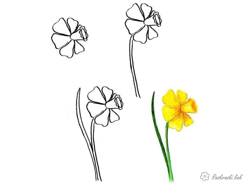 Coloring How to draw Flower, steps, paint