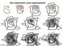 Розмальовки Розфарбувати квіти як намалювати троянду олівцем троянди десять троянд