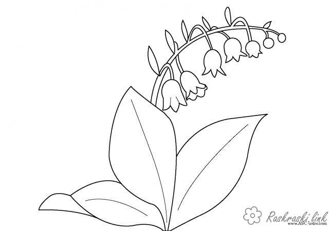 Розмальовки Розфарбувати квіти