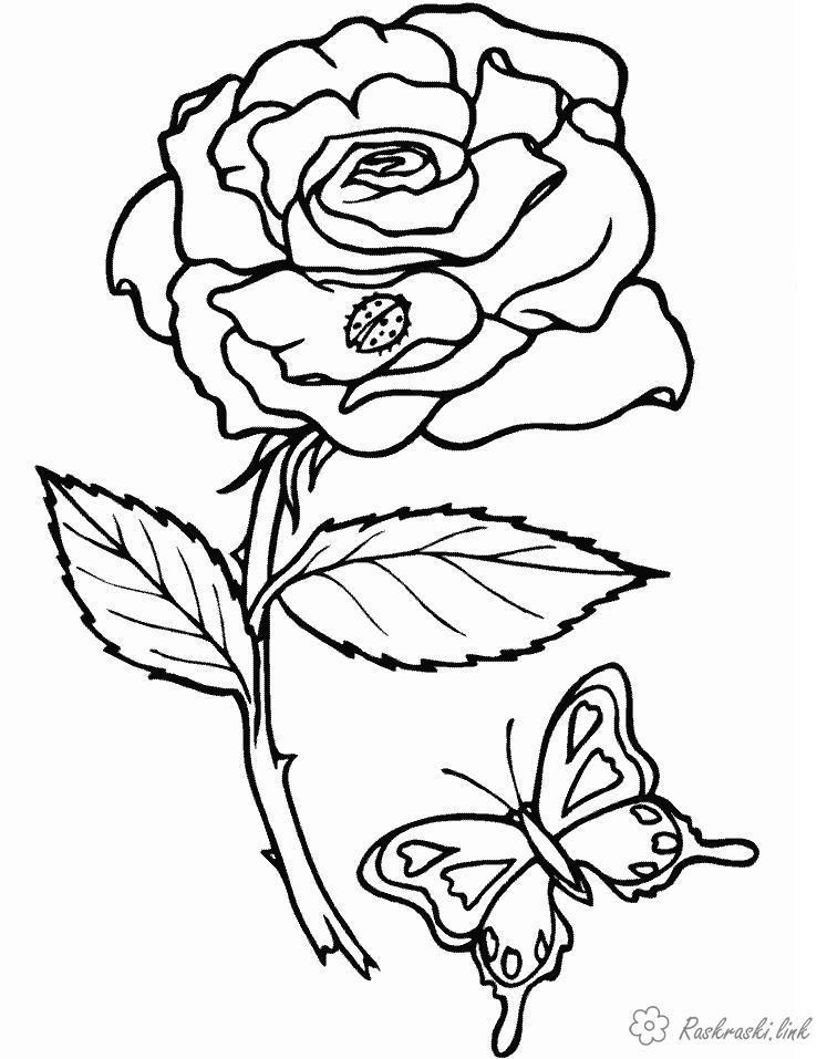 Розмальовки квітка розфарбування квітка метелик стебел листок пелюстка