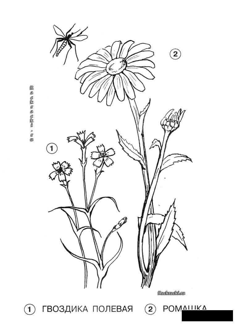 Раскрасить цветы Раскраски распечатать бесплатно.
