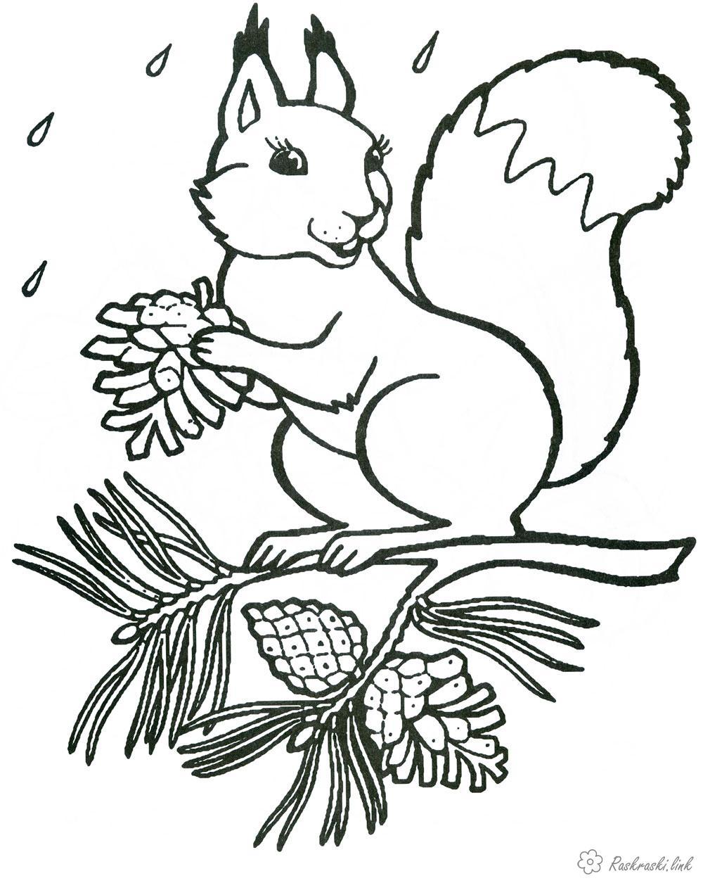 Розмальовки осінь білка білочка горіхи на дереві стоїть радіє