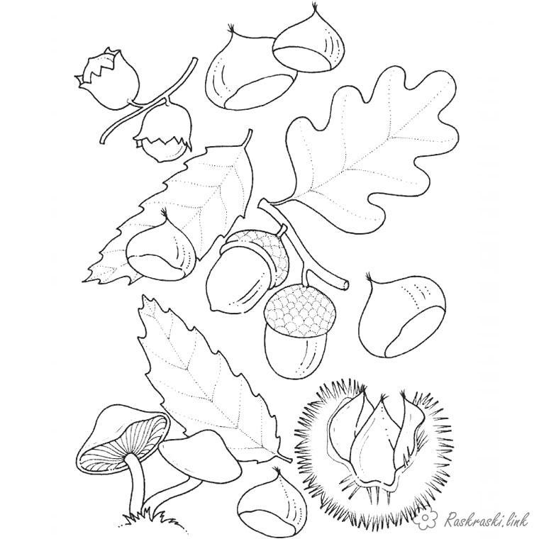 Розмальовки Осінь розфарбування дитяча, гриби, жолуді, листя