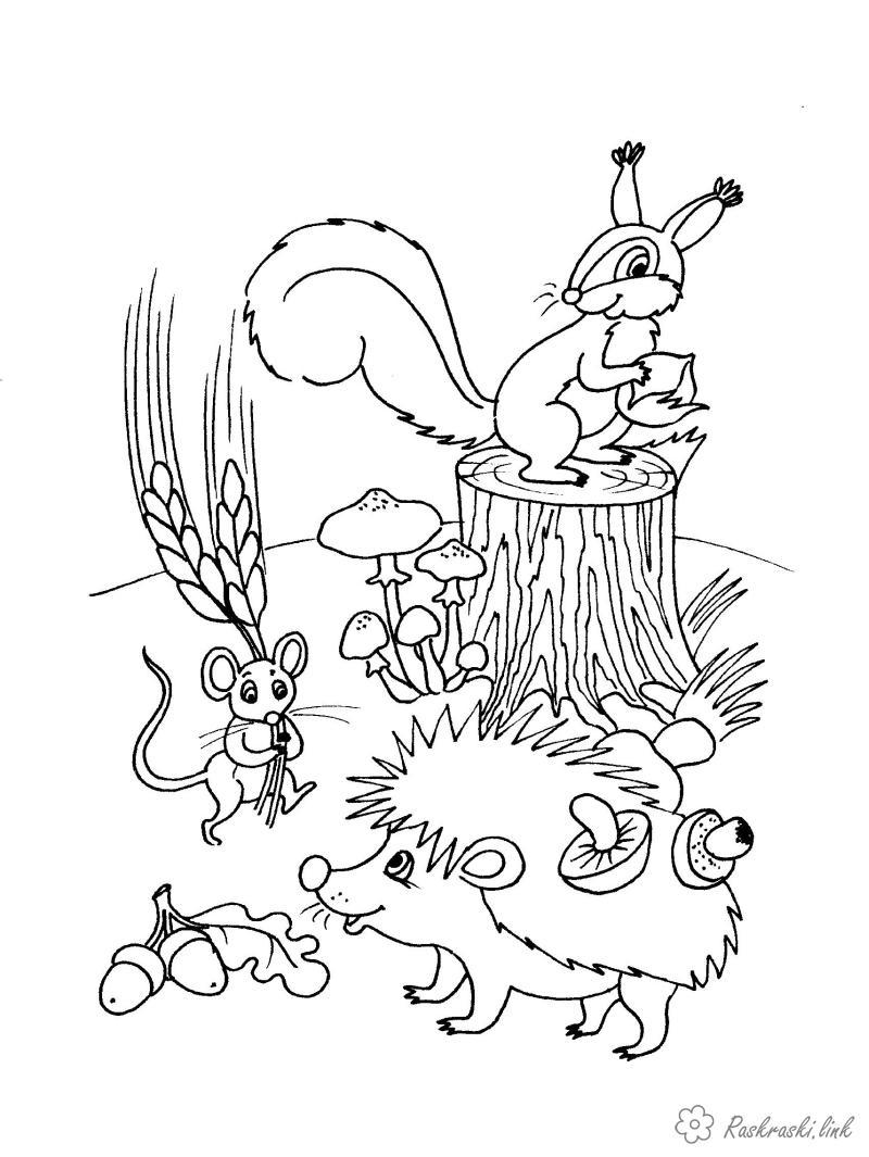 Розмальовки Осінь звірі, білочка, їжачок, миша, припаси, осінь