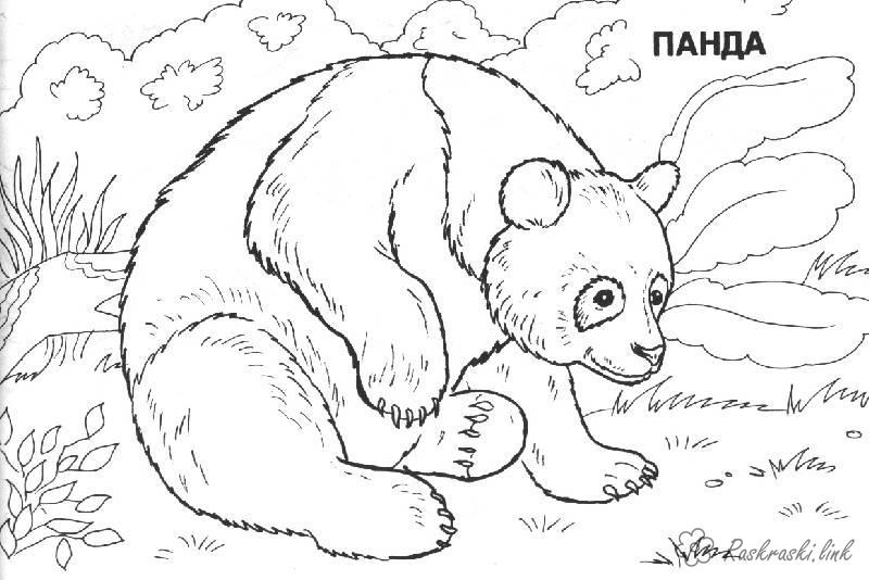 Coloring Asia coloring pages books for children, travel, asia, animals, panda