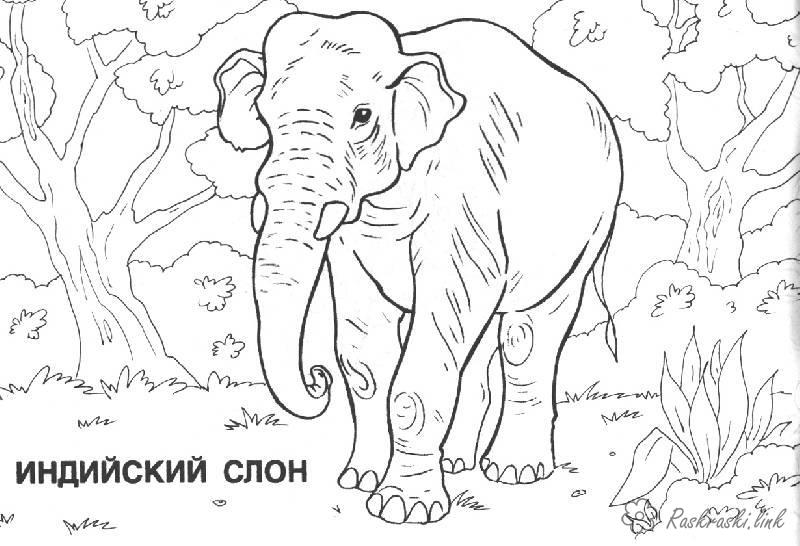 Coloring Asia coloring pages books for children, travel, asia, animals, coloring pages animals, elephant, India