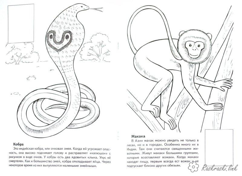 Coloring Asia coloring pages books for children, travel, asia, animals, coloring pages, animal cobra, monkey