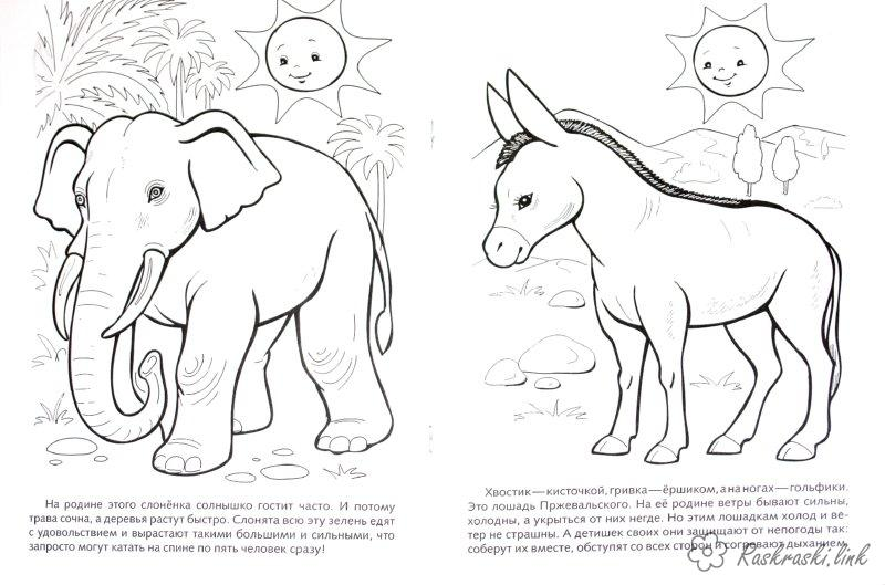 Coloring Asia coloring pages books for children, travel, asia, coloring pages animals, animal, elephant, donkey
