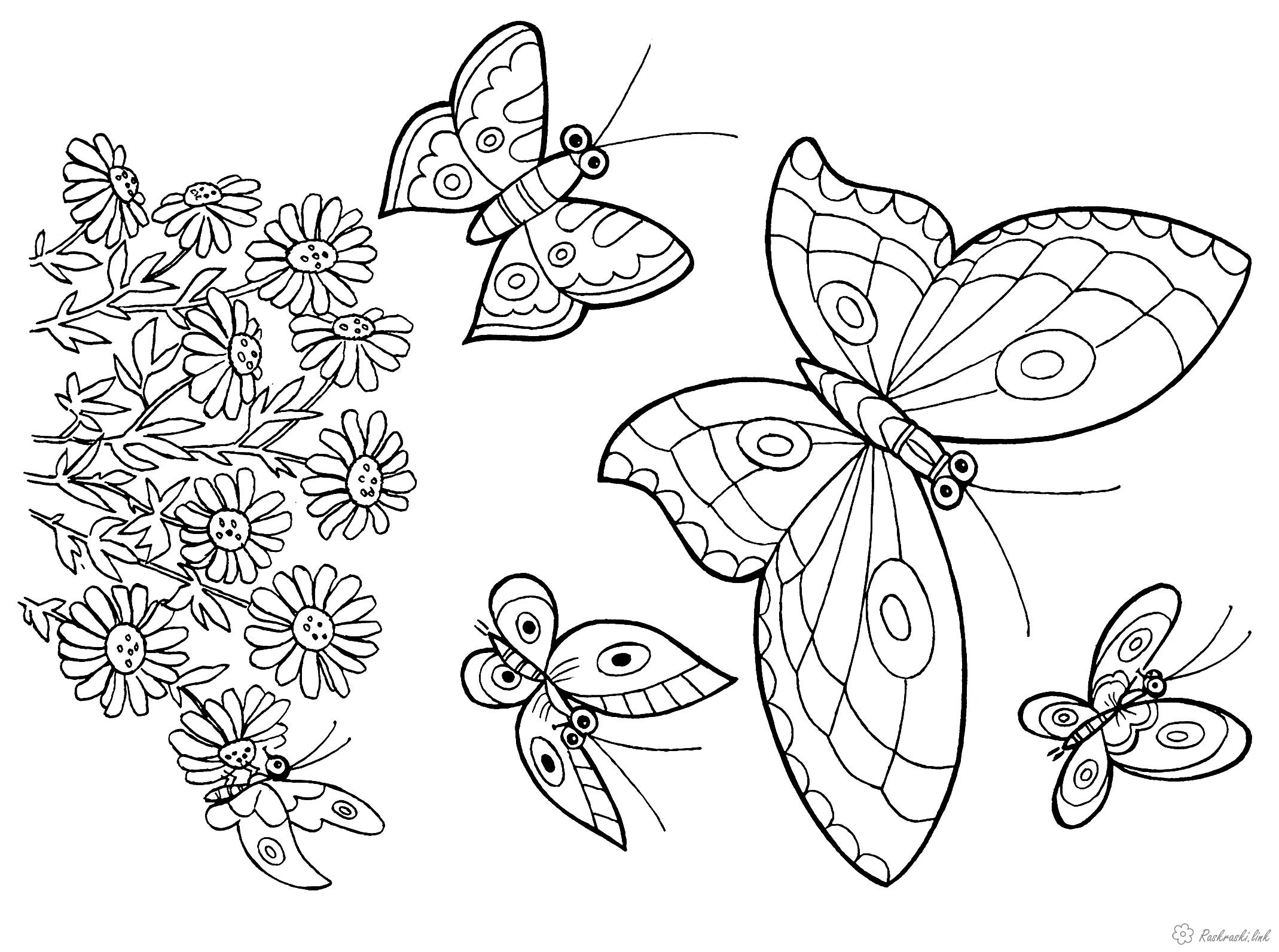 Розмальовки квіти Дитяча розфарбування, квіточки і багато метеликів