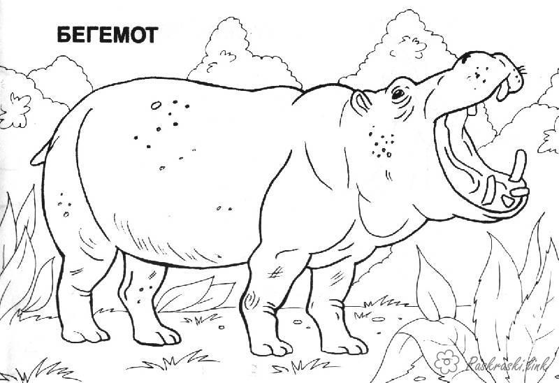 Розмальовки Африка розмальовки, бегемот, африка, тварини
