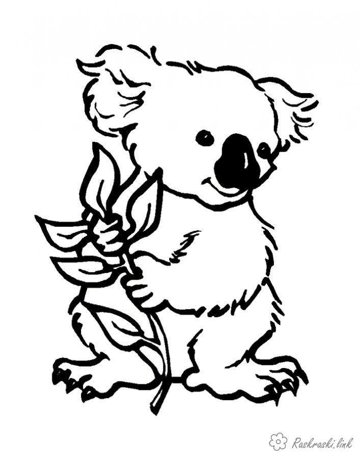 Coloring Australia coloring pages books for children, animals, koala